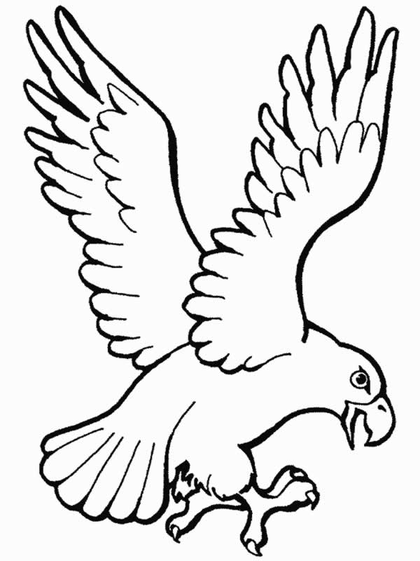 Dibujos para colorear de Aguilas, Plantillas para colorear de Aguilas