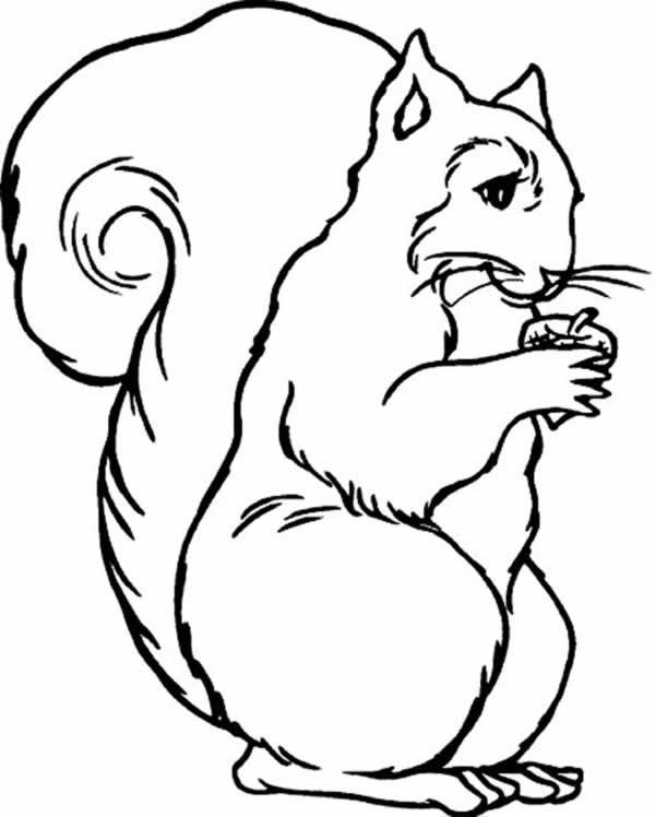 Imagenes para dibujar de animales terrestres - Imagui