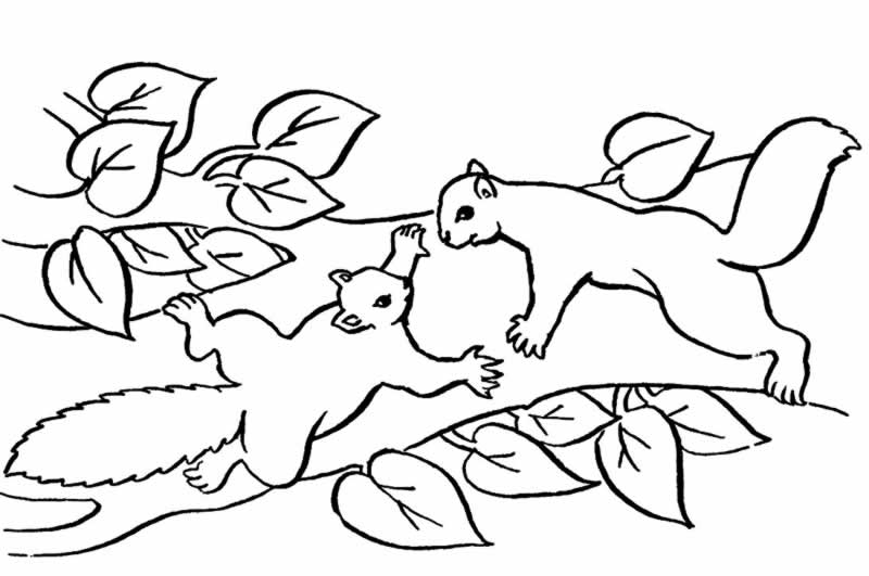 Bosque templado para colorear - Imagui