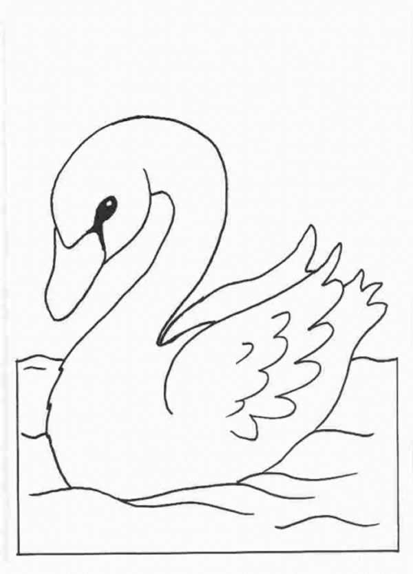 Plantillas para colorear Cisnes