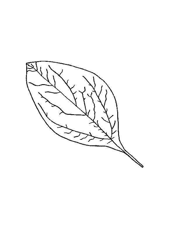 para bajarte las plantillas para colorear de hojas de los